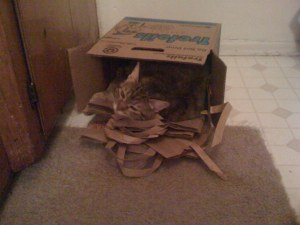 LilyRocket in paperbag-box heaven